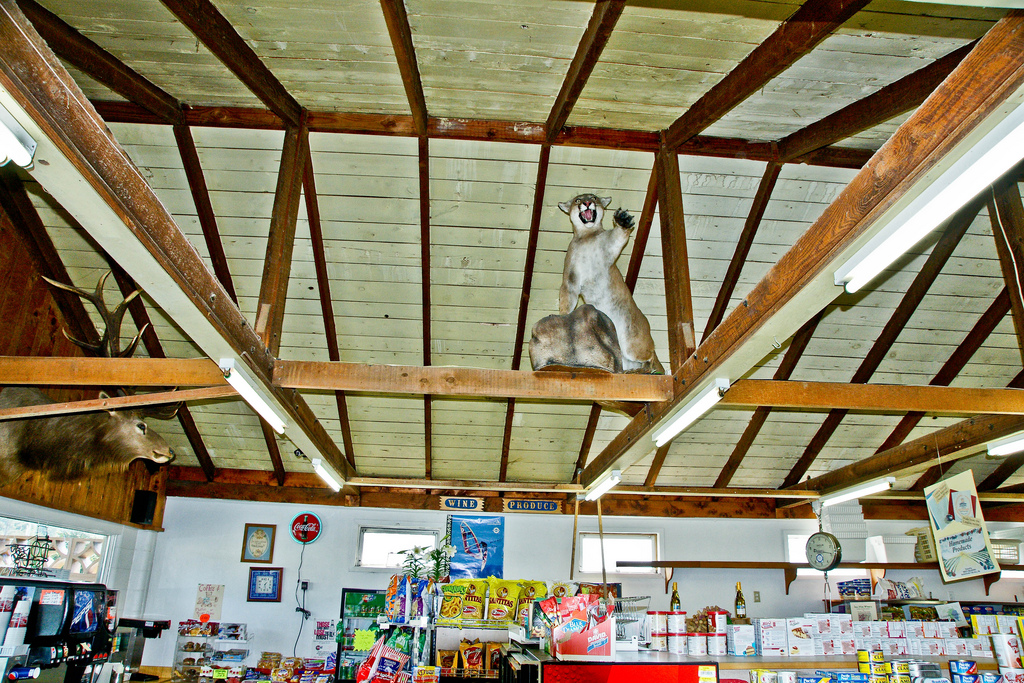 Mountain Lion in the Market